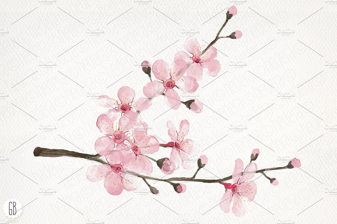 Cherry Blossoms Watercolor Cherry Blossoms Blossom Art Pink