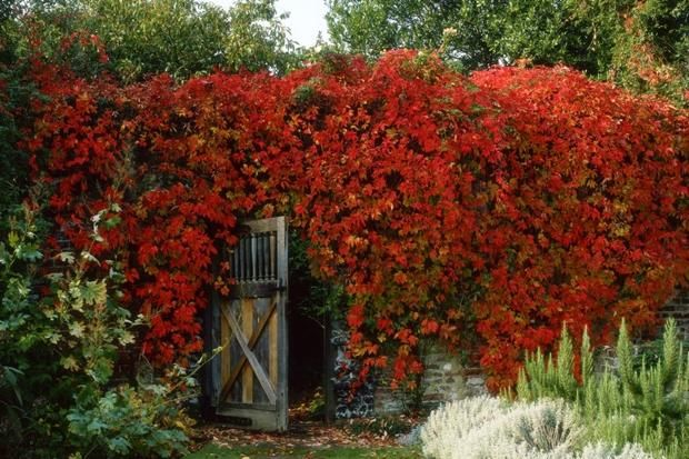 Top 10 Climbers For Shady Walls Shade Plants London Garden