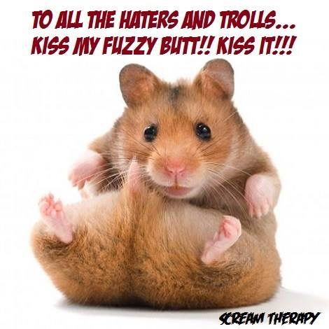 Pin by Megan on Amazing animals Cute hamster names