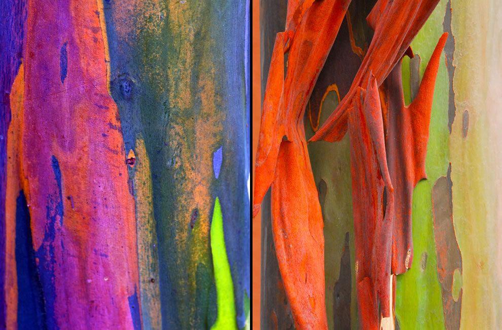 cortezas de eucalipto - Buscar con Google