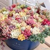 Photo of opening small cactus plants # arrangement # cactus # cactus art # cactus garden …