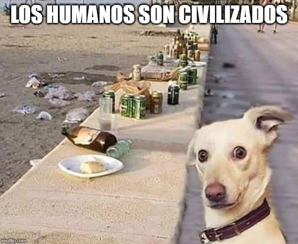 8 Memes Que Muestran Lo Cerdos Que Son Los Seres Humanos Cuando Visitan Las Playas Y En General Perros Graciosos Chistes De Perros Memes Perros