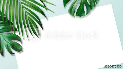 Stock Image: Summer tropical leaves with blank white paper
