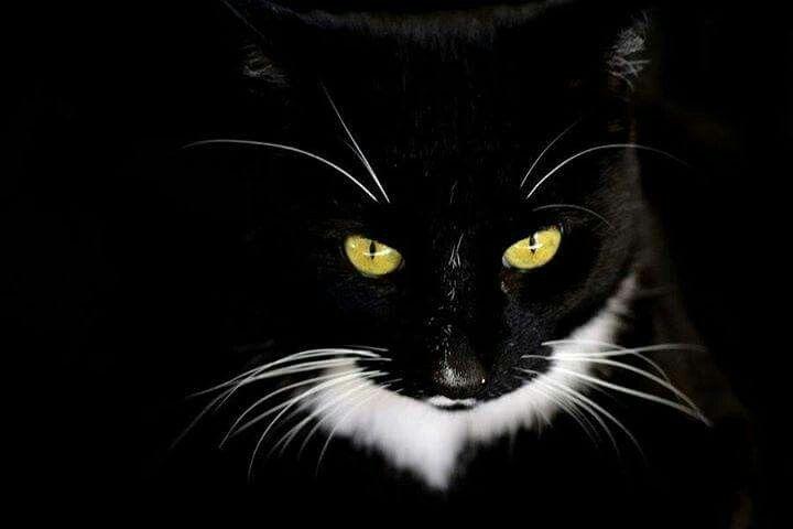 Olho dr gato......