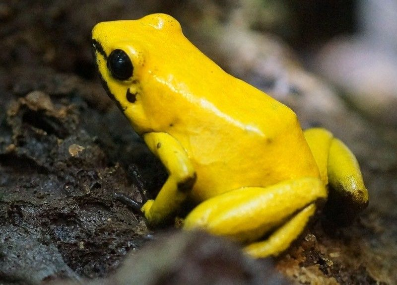Yellow Frog Color Palette Yellow Animals Color Palette Yellow Frog Drawing
