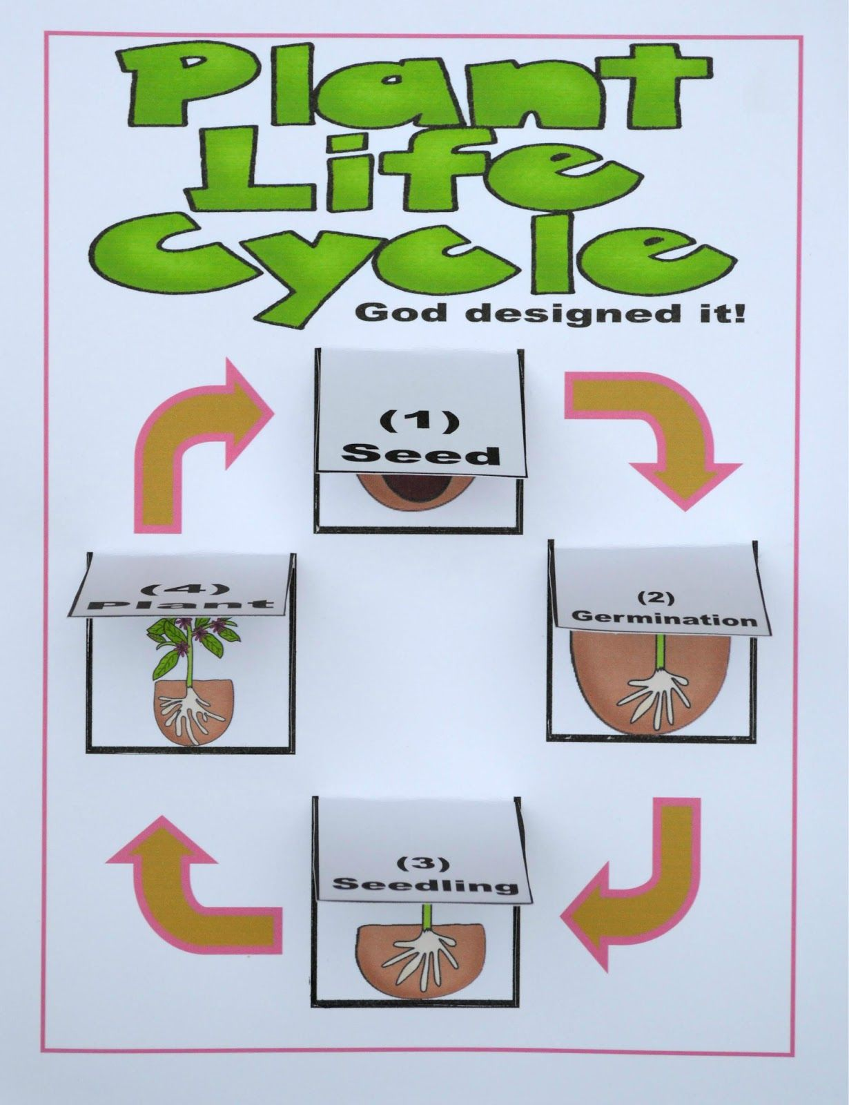 You Can Print The Lift The Flap Plant Life Cycle Chart To