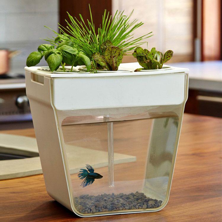 17 best 1000 images about Aquaponics on Pinterest Gardens Hydroponic
