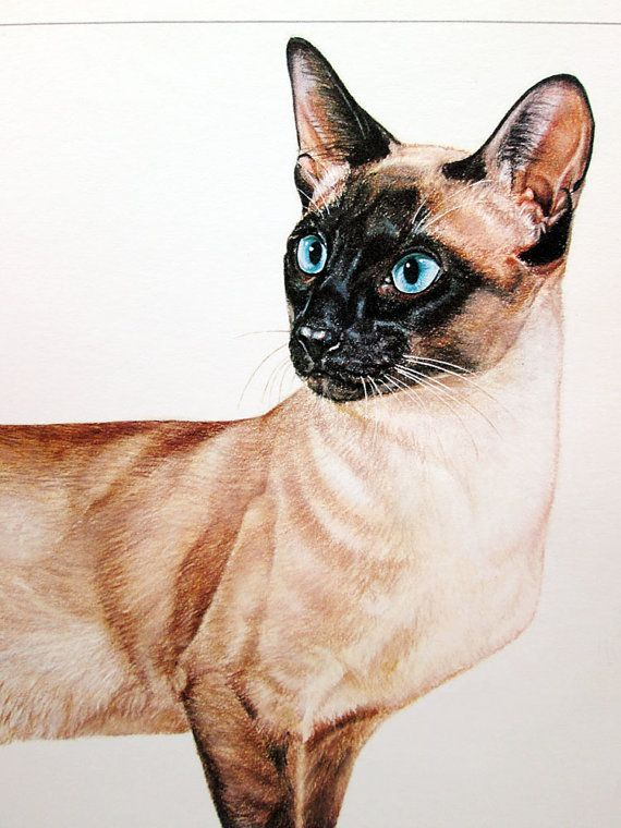 Vintage Cat Illustration Print Siamese Illustrated Color Cats Illustration Cat Illustration Vintage Cat