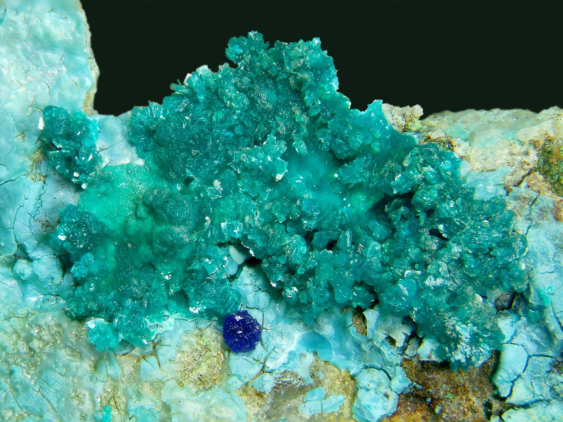 Tyrolite.  Mina de les Ferreres (level 3), Rocabruna, Camprodon, el Ripollès, Girona, Catalunya, Espagne FOV=9.5 mm. Collection et photo J.L. Garrido