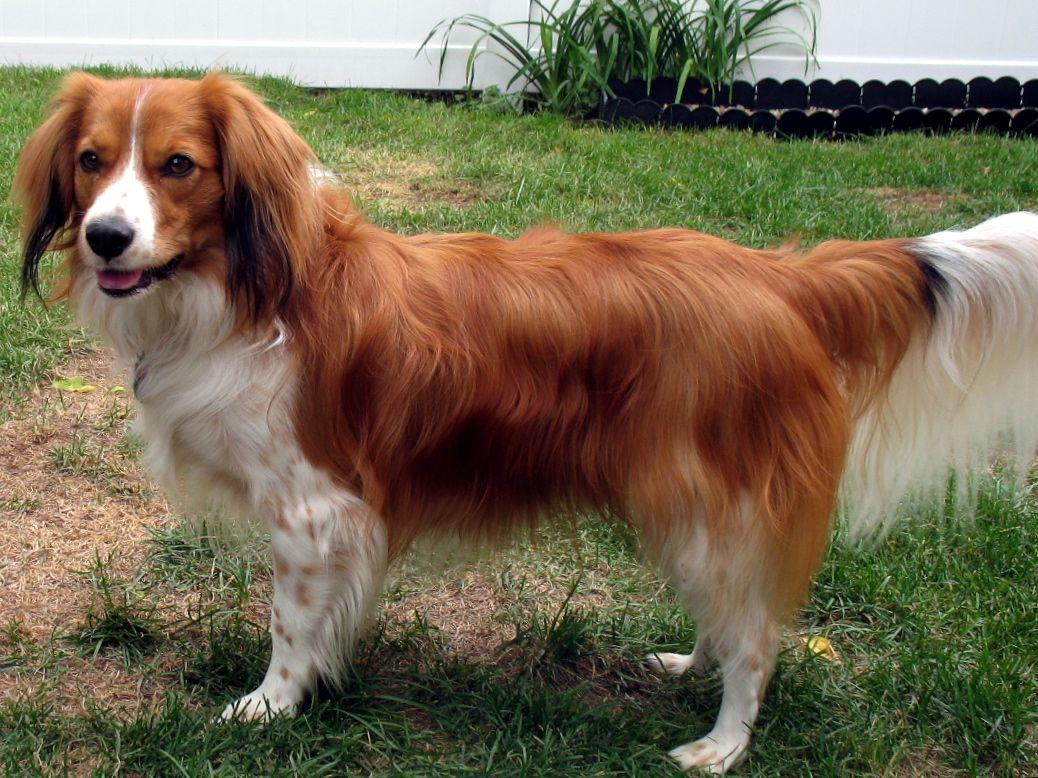 Animal Wallpapers Dogs 101 Dogs 101 Husky Dogs 101 Labrador