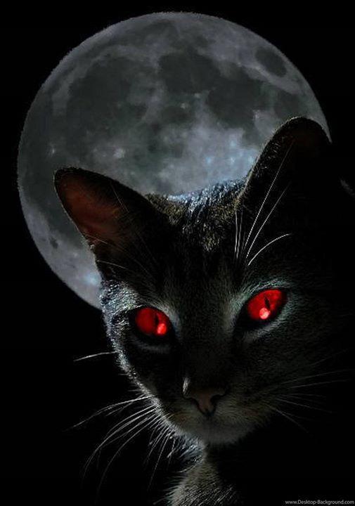 NgàY Halloween 2020 Góc Ma Quái* Ngày xưa vào đêm trăng rằm, loài in 2020 | Black cat