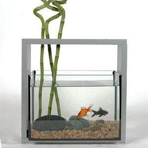 Aquarium Fish Gallery Fish Tank Design Pinterest Home