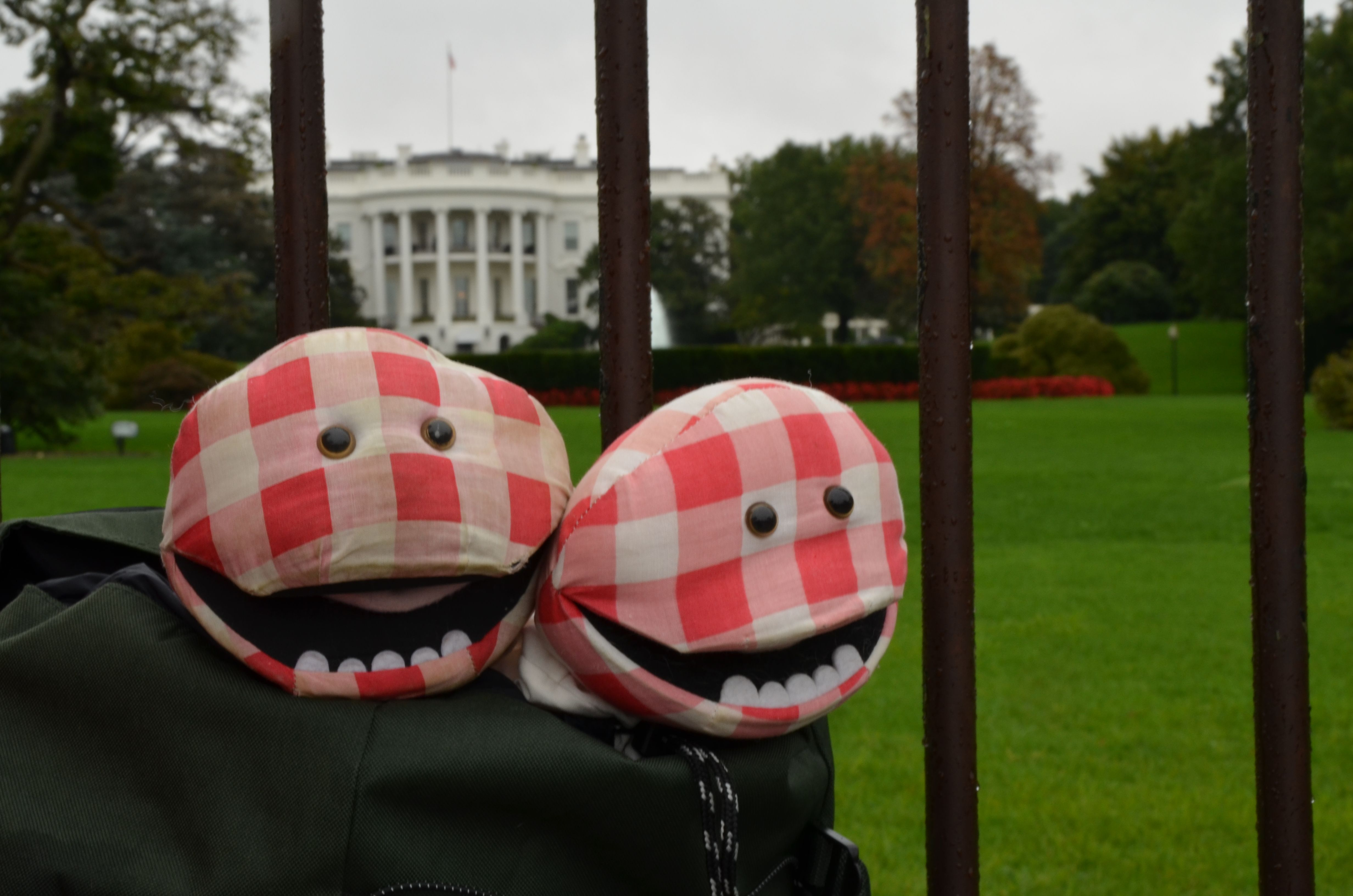 @ White House