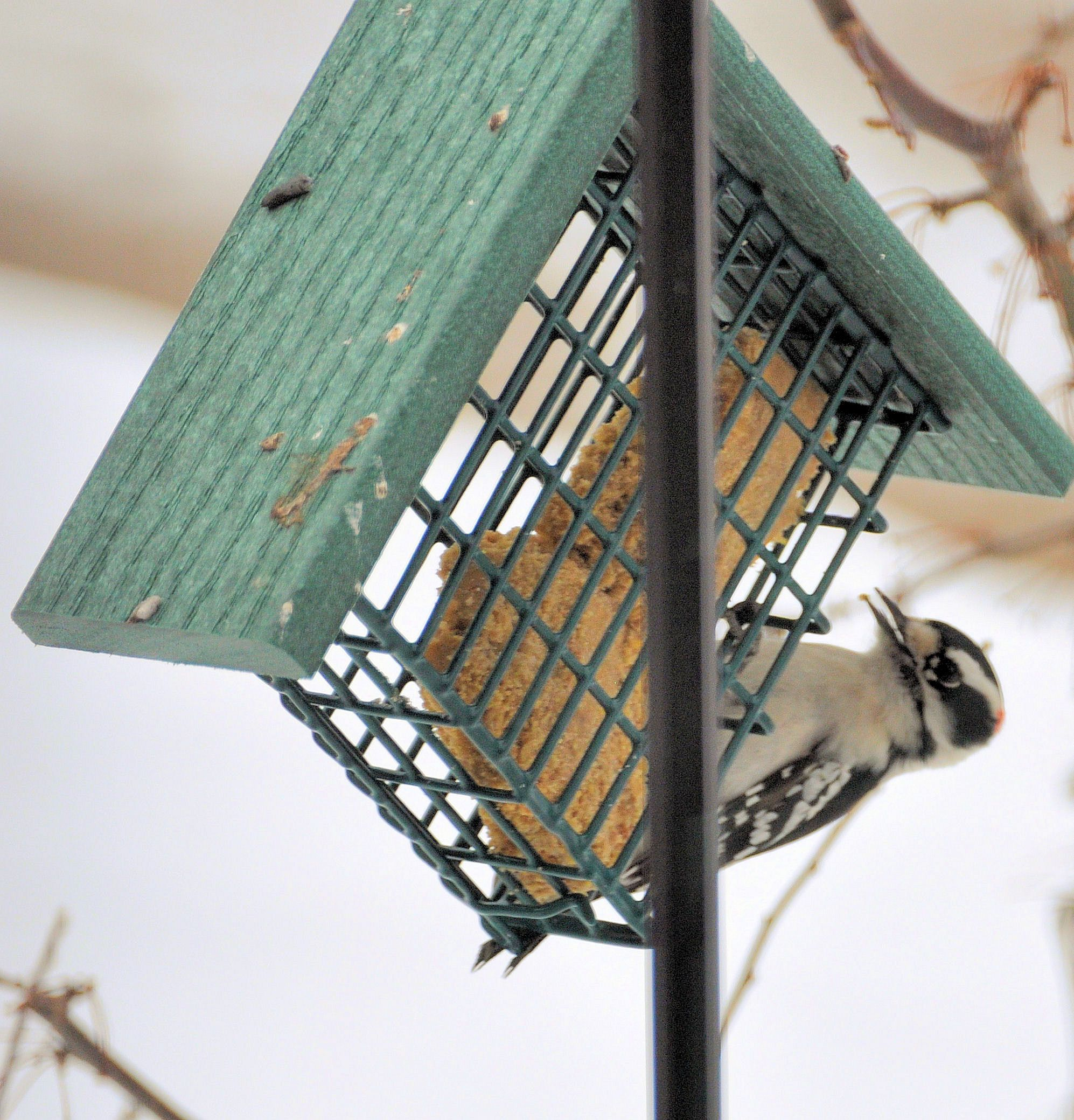 outstanding without full peanut plans feeder that bird image make butter a diy for feeders