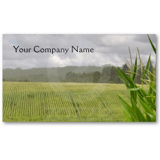 Agricultural maize business card. A photo of fields of maize stretching into the distance