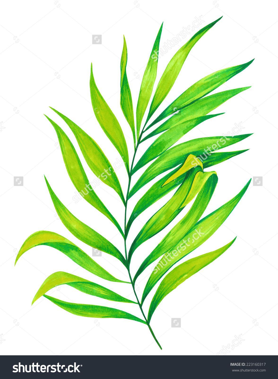 single palm leaf  watercolor illustration