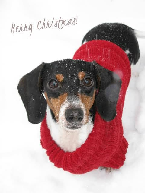 Merry Christmas From Georgia In Canada Photo Via Penny Diffey