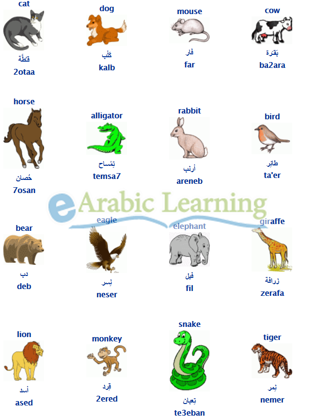 Animals In Egyptian Arabic Arabic Language Learning Arabic Arabic Kids