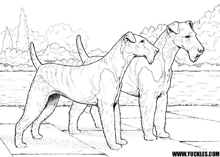 Airedale Terrier Coloring Page