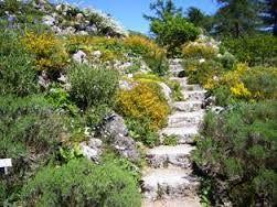 Image Result For Alpine Gardens
