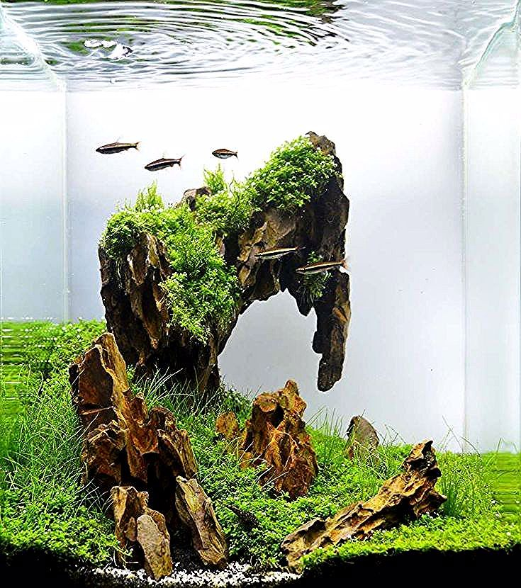 Beste Aquascaping Design Ideen Um Ihr Aquarium Zu Dekorieren