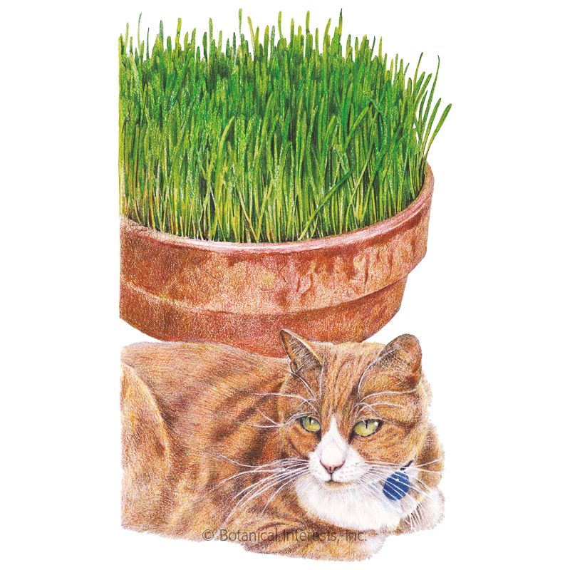 Cat Grass Oats Seeds Cat Grass Grass Indoor Plant Pots