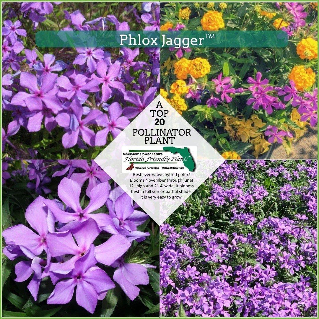 Florida Friendly Plants - Flowering Perennials Native ...