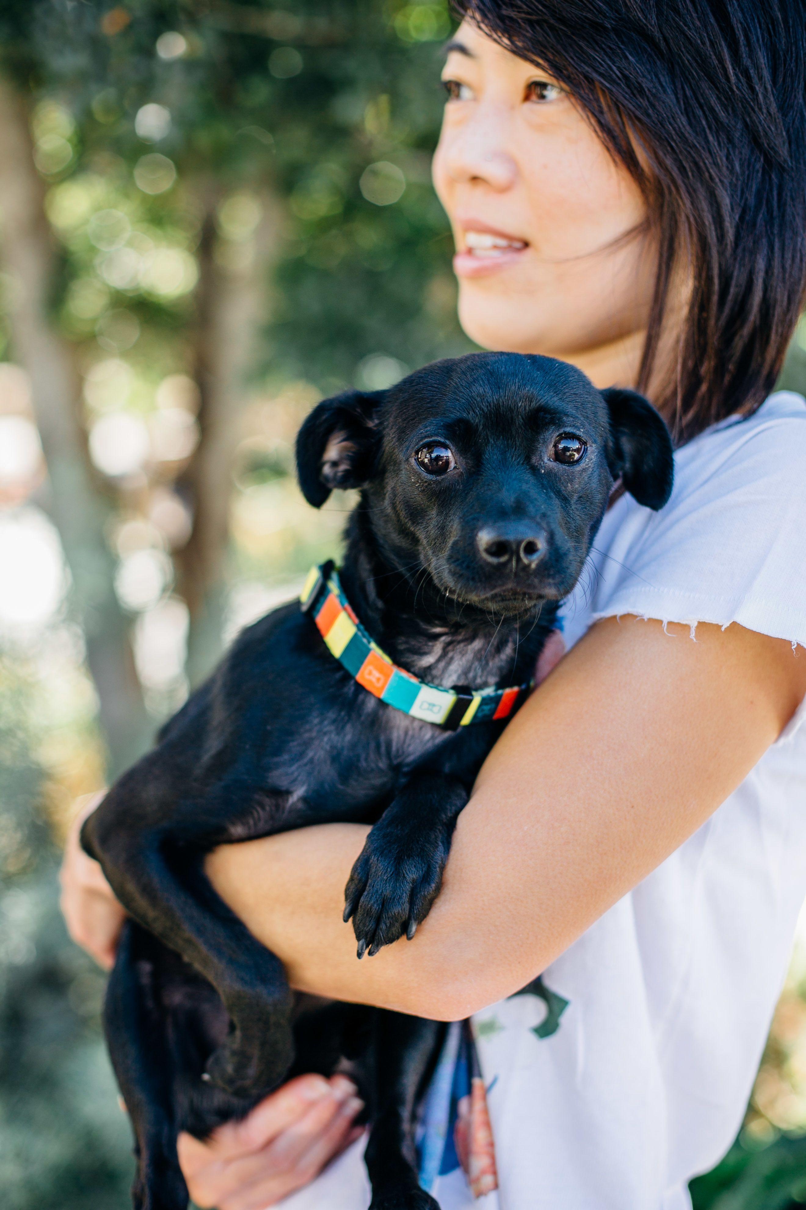 Adopt Lupina on Dog adoption, Animal rescue, Pet adoption