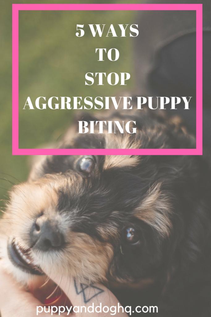 bd73e8cbcfcb9f83280f99d23f2614f8 - How To Get A Dog To Stop Aggressive Biting