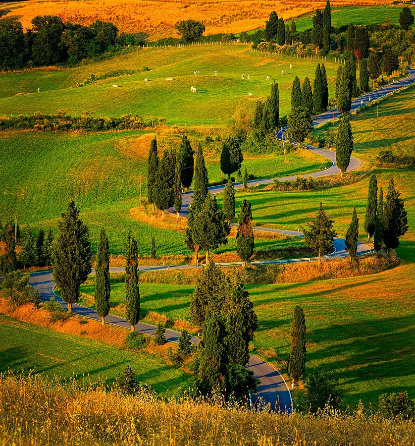 Rural road near the Tuscan town of Montechiello,province of Siena , Tuscany region, Italy
