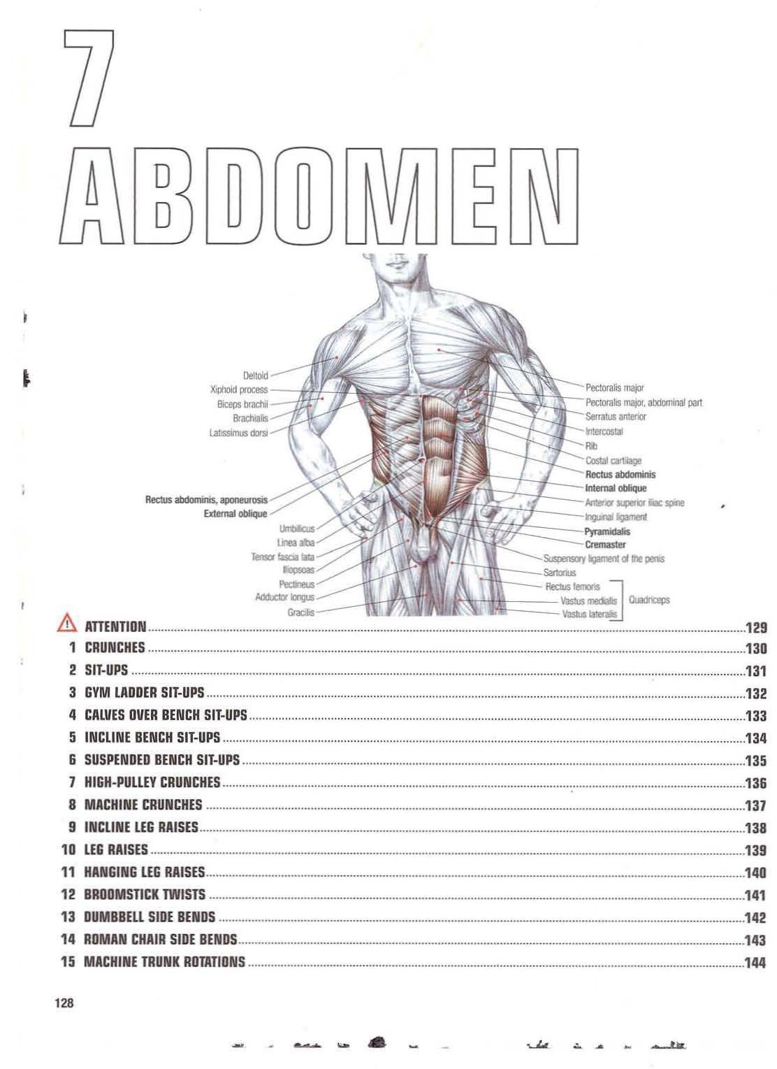 Abdomen anatomy   Abs / Abdomen   Pinterest