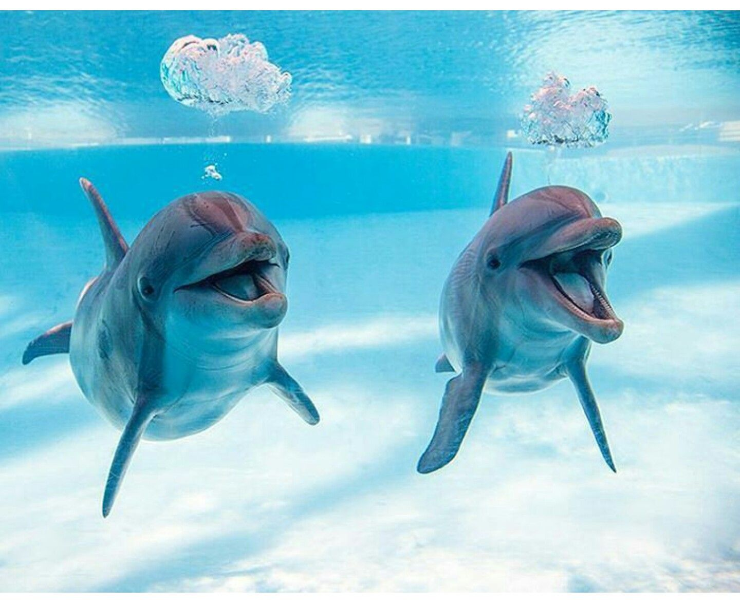 So cute, always smiling. Dolphins