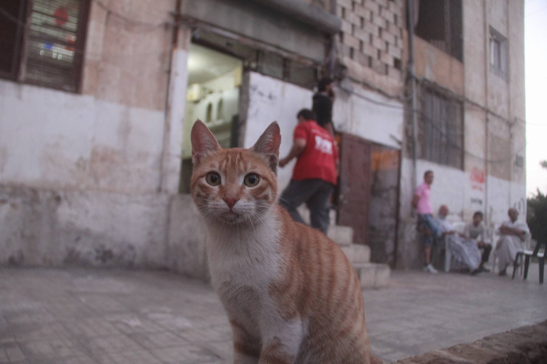 Hey Where S My Lunch At The House Of Cats Aleppo Syria لك وين الغدا جعت في بيت القطط حلب سوريا Animals Cat House Aleppo Syria