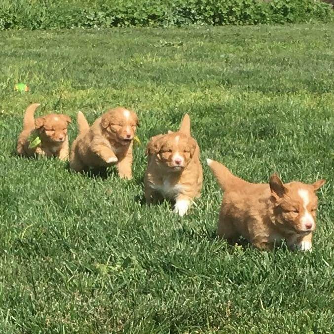Nsdtr pups