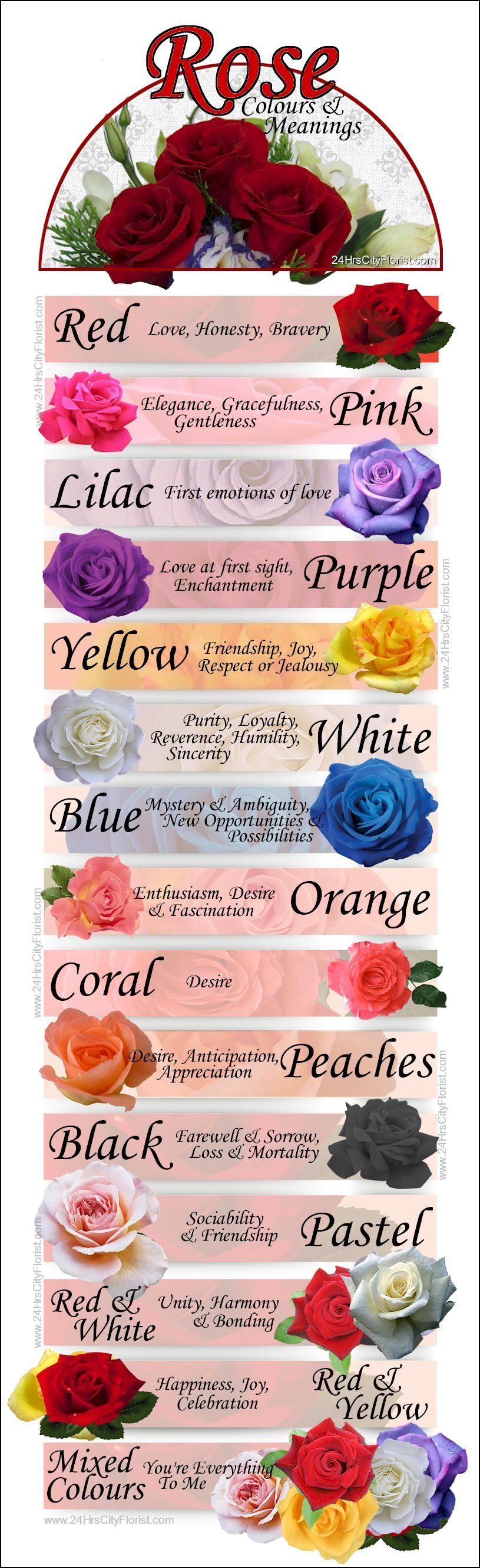Pin by Cityflorist Sg on All About Flowers | Pinterest | Rose color ...