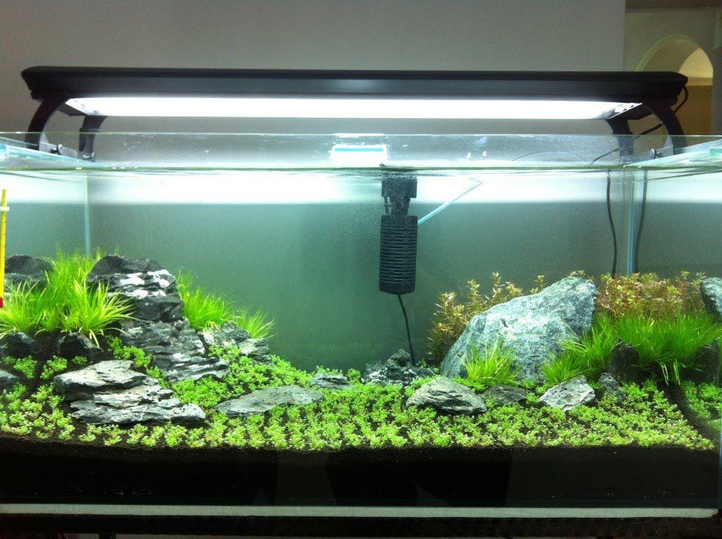 Aquarium Live Plants for Beginners | Live aquarium plants ...