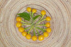 Pflegeleichte Pflanzen: Die Top 10, die nicht gegossen werden müssen #pflegeleichtepflanzen