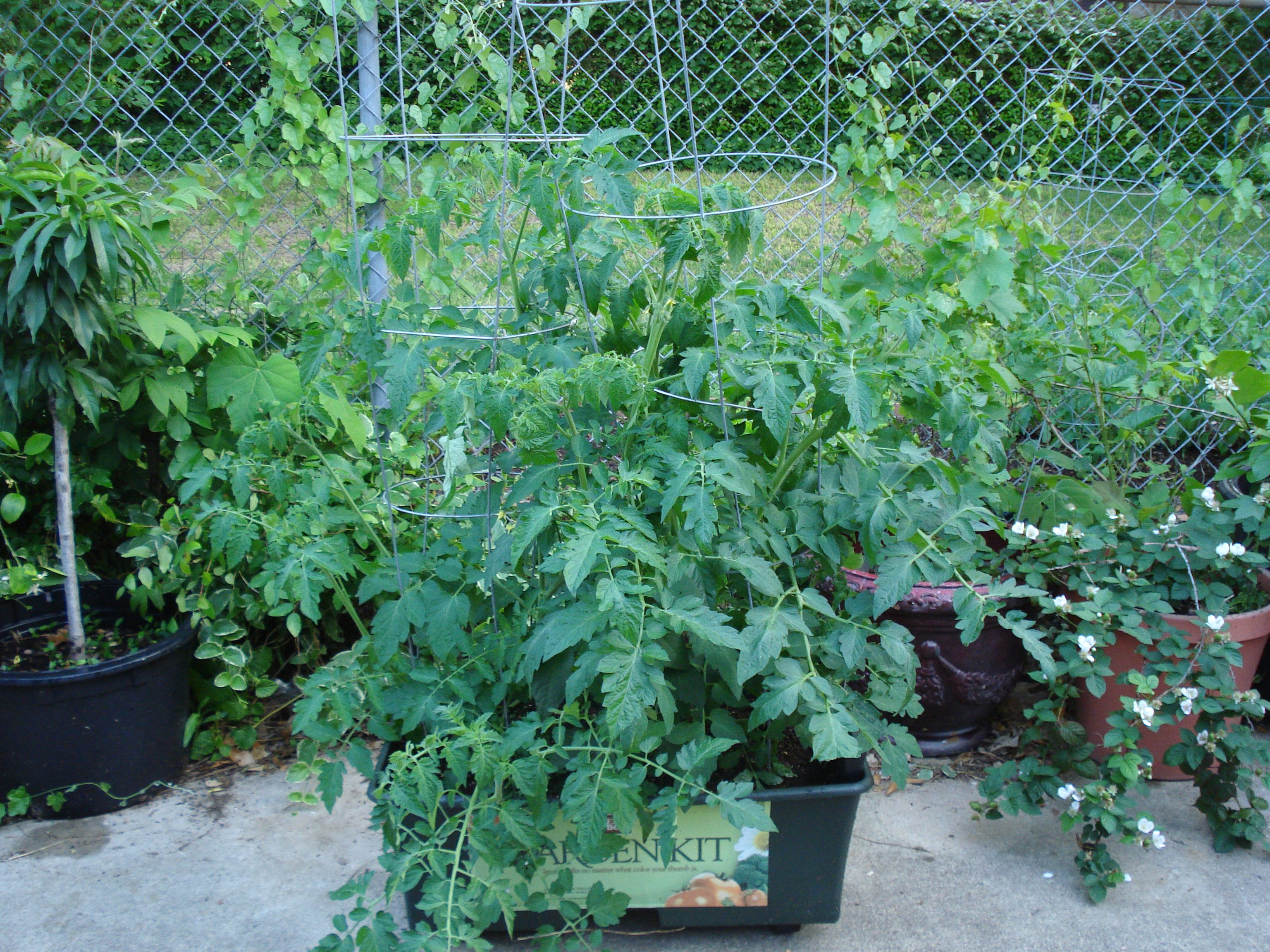 Tomatoes And Other Veggies Love The Earthbox.