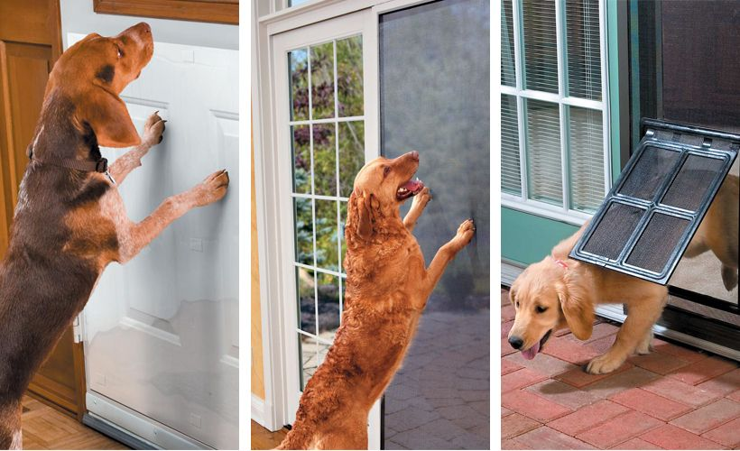 Learn how to protect wood doors and door screens from your