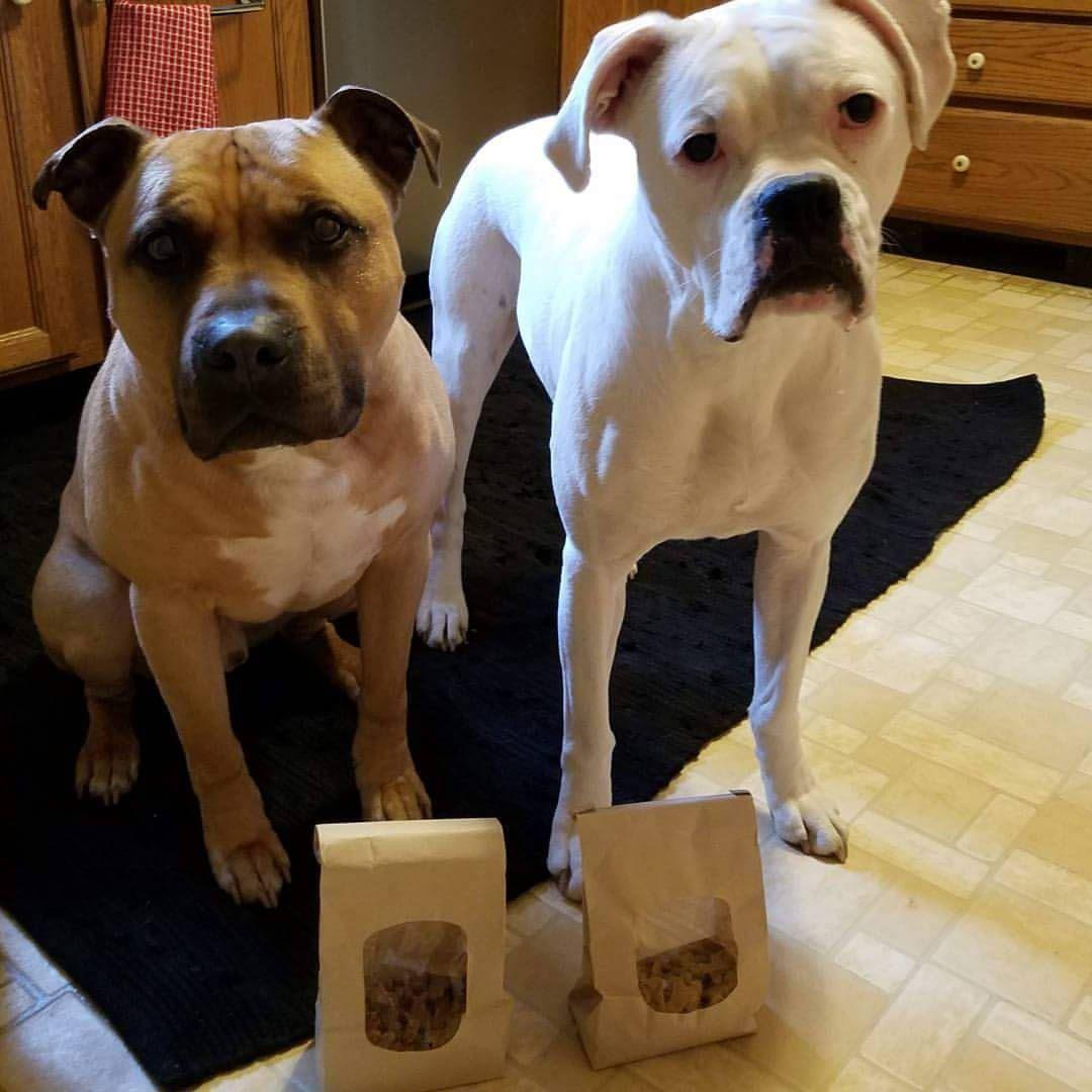 Multi Dog Bones Custom Cookie Cutter Embosser Stamp Fondant