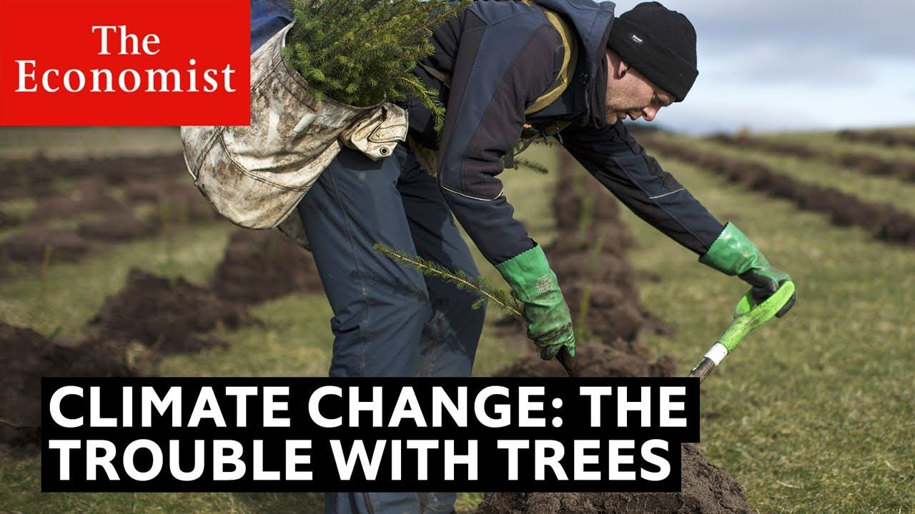 Climate change the trouble with trees The Economist