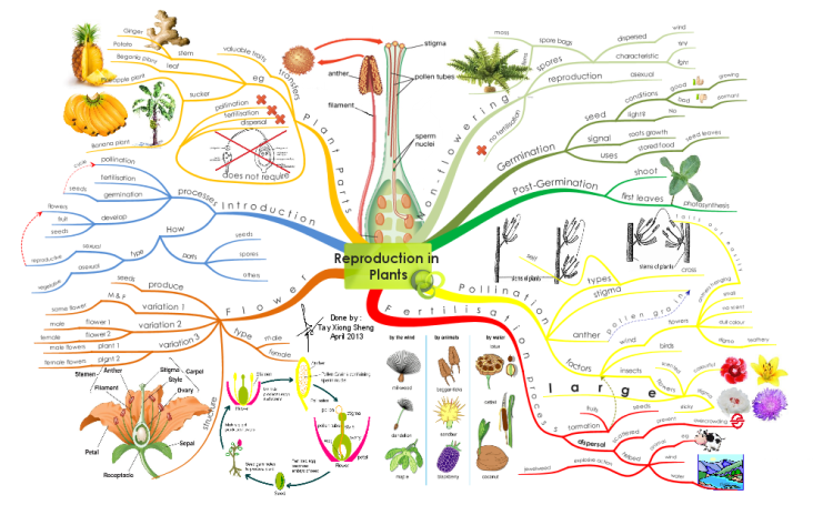 Create your own Mind Maps Reproduction in Plants Mind