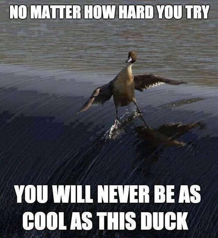 The 10 Best Memes Of 2014 Dankest Memes Memes Funny Memes