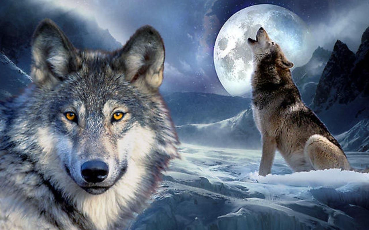 Wolves And Indians Wallpaper