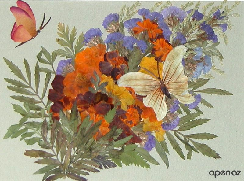 Картина из гербария 100 ПОДЕЛОК 43