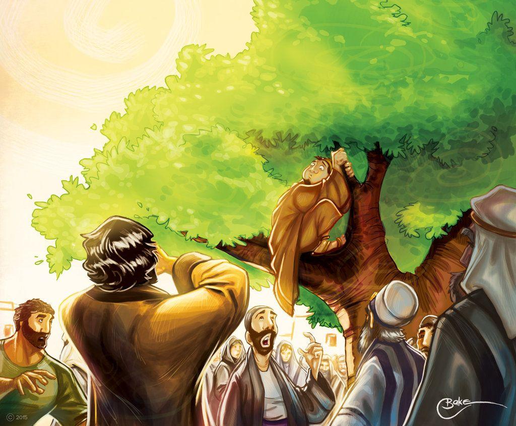 sycamore tree zacchaeus - Google Search | Matt\'s Art | Pinterest ...