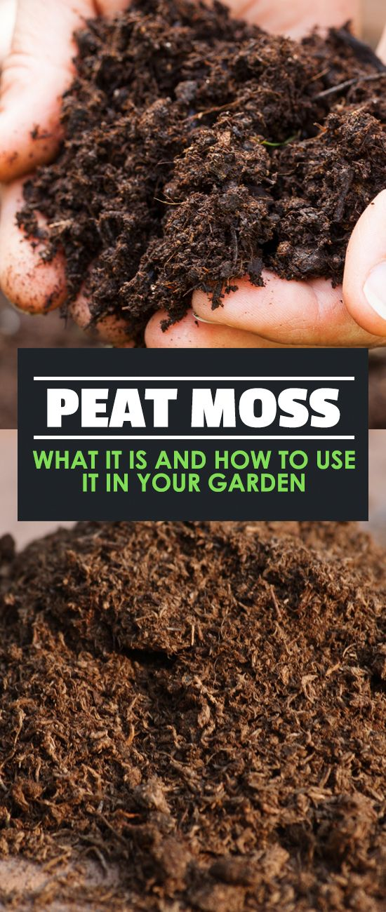 Peat Moss What It Is And How To Use It In Your Garden Peat Moss