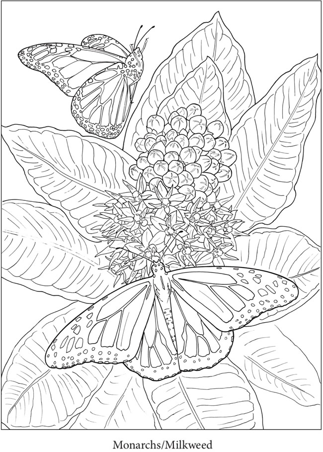 Welcome To Dover Publications In 2020 Butterfly Coloring Page Dover Coloring Pages Garden Coloring Pages