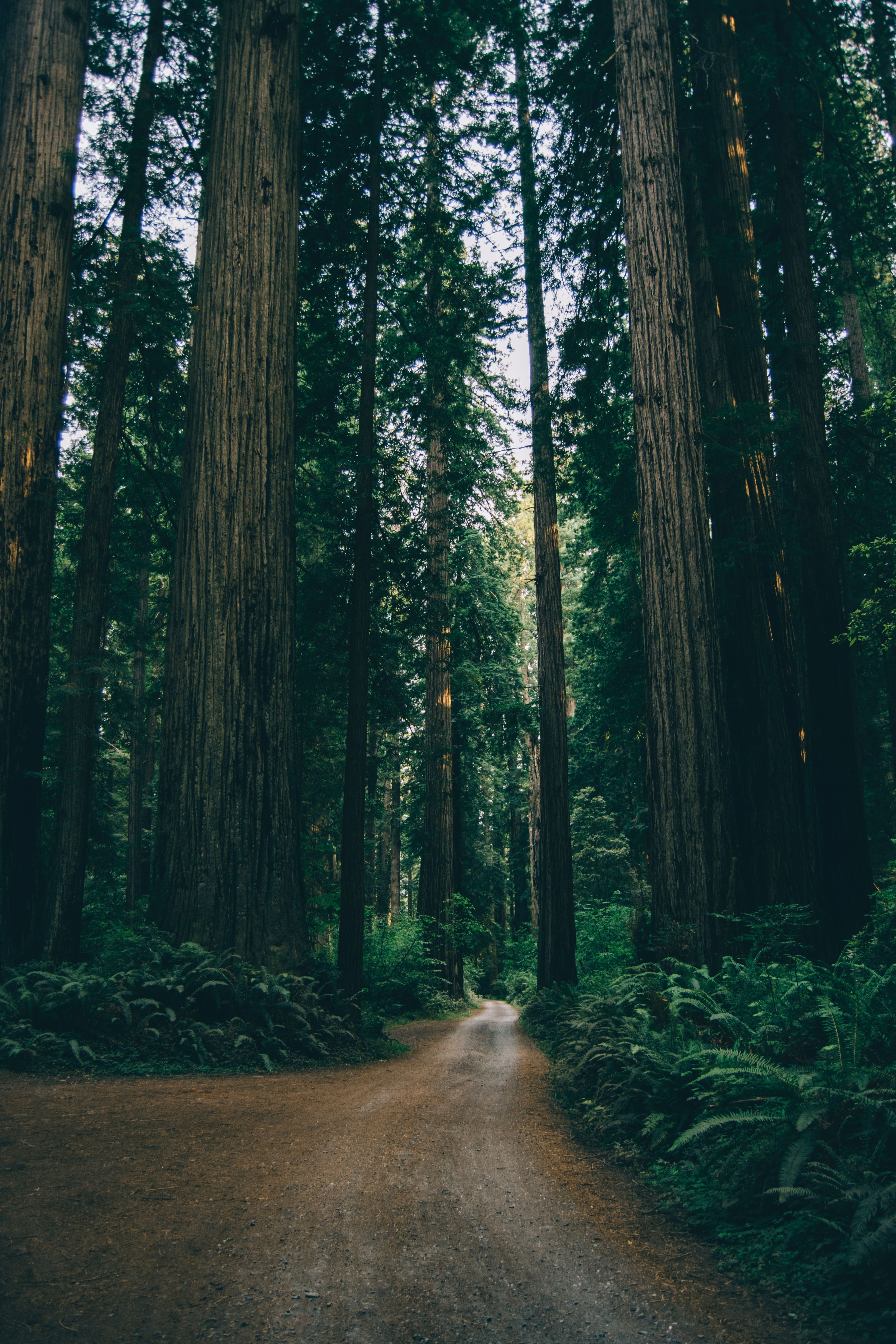 9 Dreamy Destinations For Forest Bathing