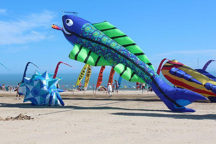 Mega Flying Fish Kite Line Laundry Go Fly A Kite Kite Making Kite